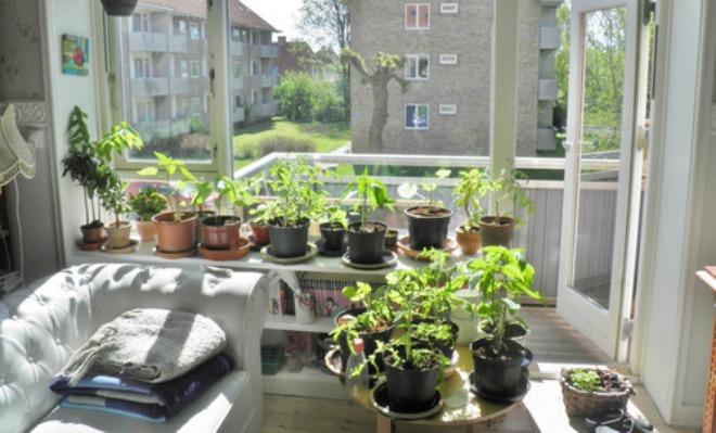 kl_plant01