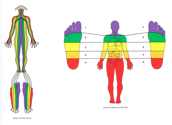 reflexology-fee-2